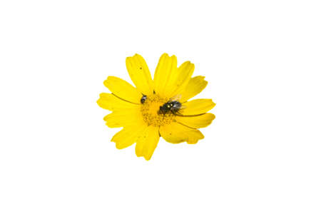 yellow flower with bug on it Stock Photo - 6719657