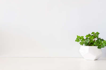 A desk against a white wall. Copy space. Ivy in a geometric pot. Minimal composition.