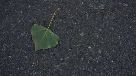 green leaf from tree against asphalt background Фото со стока