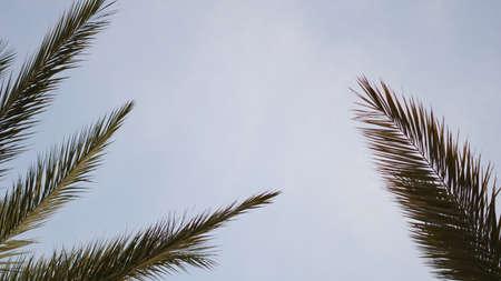 palms leafs against blue sky background Reklamní fotografie