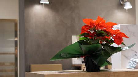 flower against modern office background
