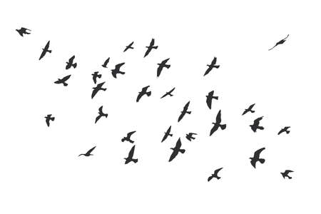 Silhouette of a flock of flying birds Archivio Fotografico - 126860660