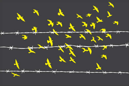 Birds flying over barbed wire