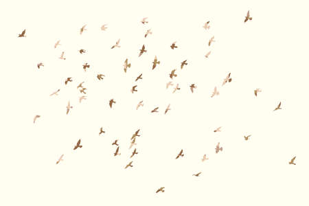 Silhouette of a flock of flying birds Archivio Fotografico - 126945219