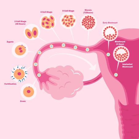 Cute kreskówek macicy na tle różowy