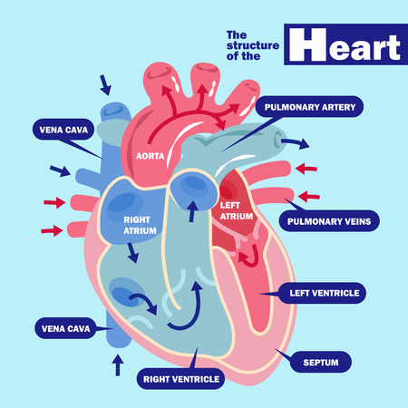 Heart with health concept vector illustration.