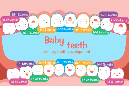 Baby tooth chart.