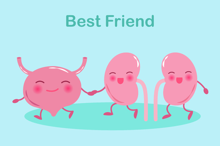 Cartoon kidney with bladder on the green background Ilustracja