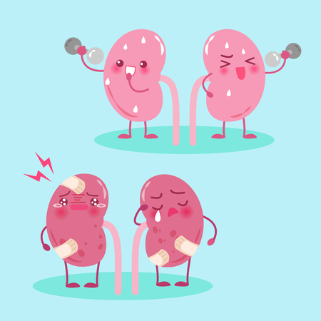 Cartoon kidneys in health concept on green background Illustration
