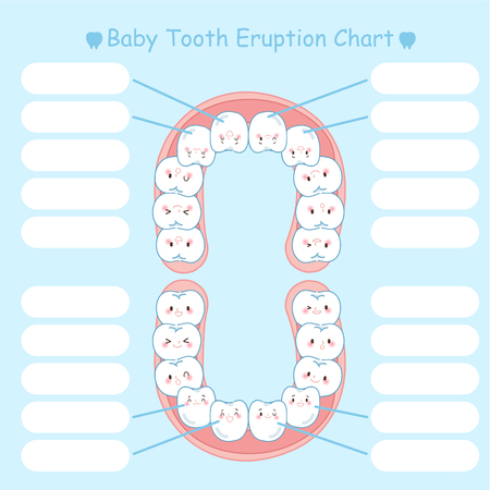 baby tooth eruption chart on the blue background  イラスト・ベクター素材