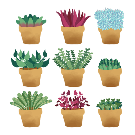 Indoor and outdoor landscape garden potted plants isolated on white background