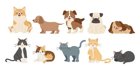 cute funny cartoon dogs and cats on the white background Çizim