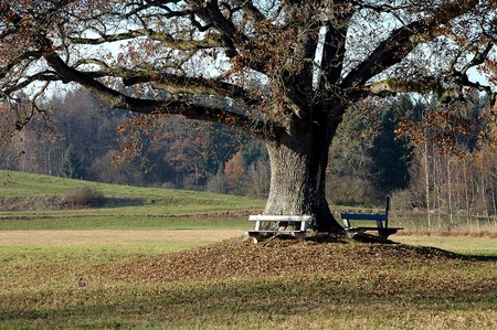 benches under an old oak in autumn