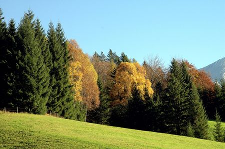 colorful forest in autumn Stock Photo - 7015984