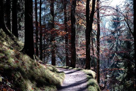hinking trail in a forest in autmn Stock Photo - 7015986