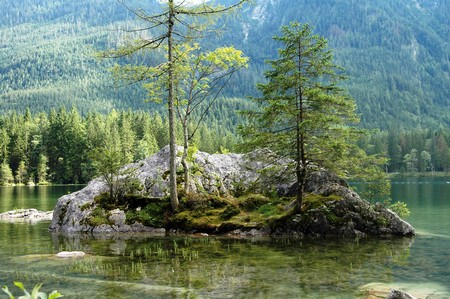Small island with trees in a lake Stock Photo - 7885591