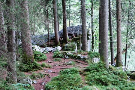 Path in a forest between trees and stones photo