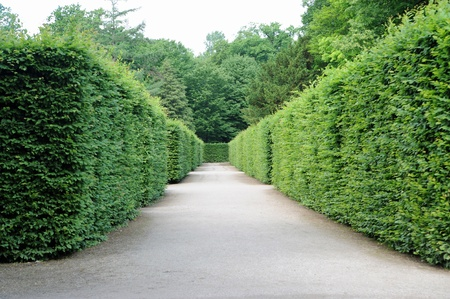 path between hedges with green foliage