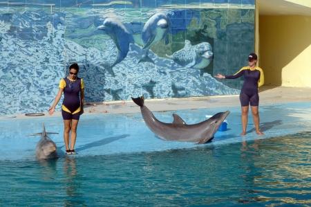 Havana, Nov 20 2011 Dolphin show in an Aquarium