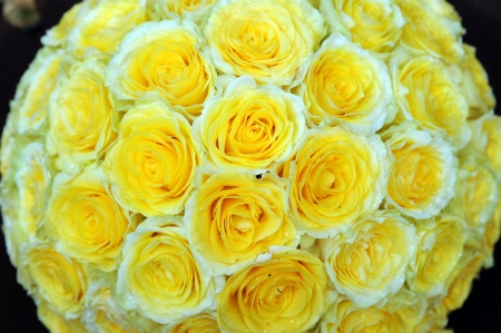 wreath of yellow roses Stock Photo