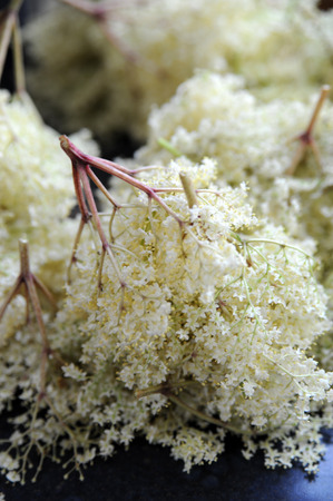 a pile of harvested elderflowers for preparing elder syrup photo