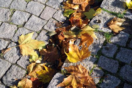 autum leaves on a cobblestone street