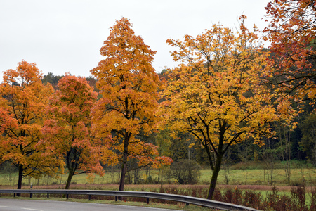 Trees with autumnal foliage along a street Stock Photo