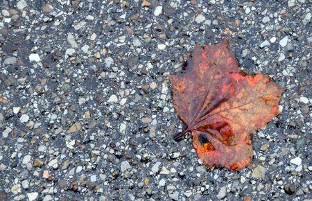fallen wet leave on a street Stock Photo