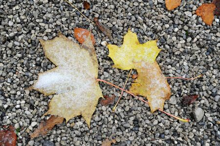 Leaves on the ground covered with snow Stock Photo