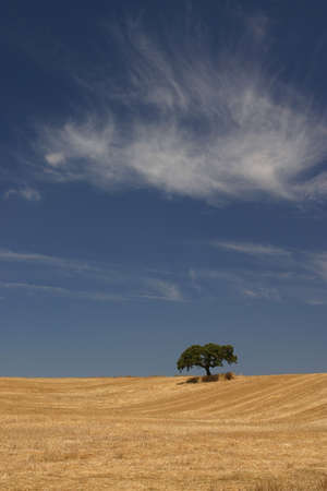 Tree in the field photo