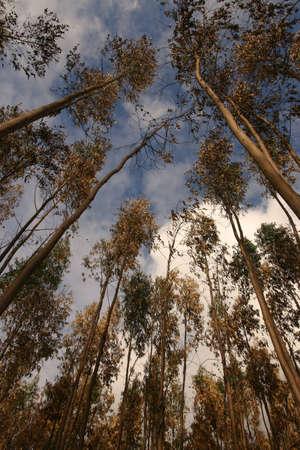 High tree