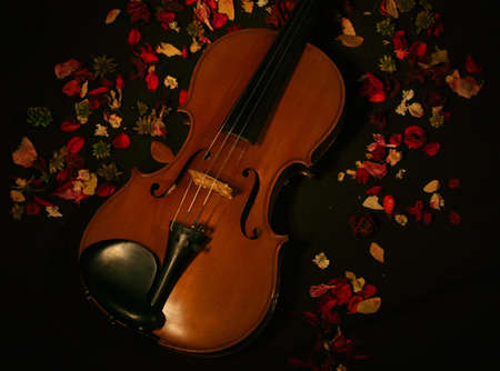 Violin and the roses