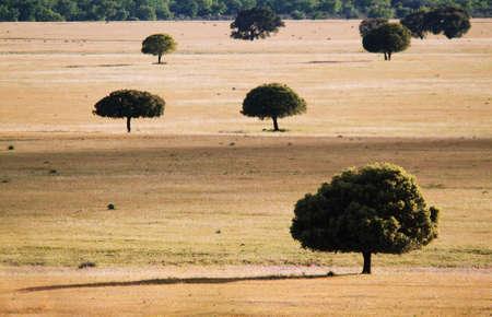eros: Trees in the grassland in Cabañeros, Spain