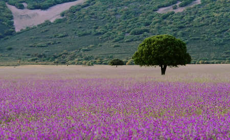 eros: Tree and flowers n the grassland in Cabañeros, Spain