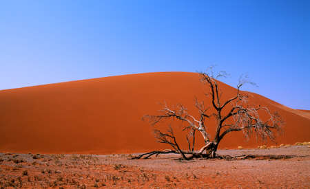 Dead valley in sossusvlei, Namibia