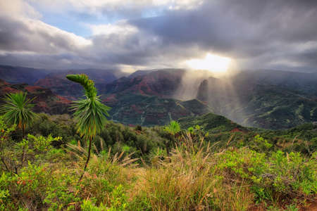 Amazing  panorama of Waimea Canyon in Kauai, Hawaii Islands  photo