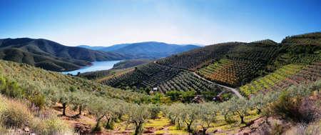 extremadura: Plantation fields and lake near the village of La Pesga, Extremadura, Spain