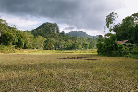 Landscape of paddies and mountains in Sulawesi, Indonesia Stock Photo - 25411562