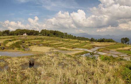 sulawesi: Landscape of paddies in Sulawesi, Indonesia