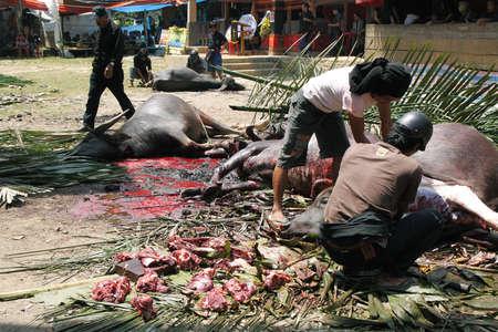 solemnity: Tana Toraja, INDONESIA-11 Settembre persone non identificate di taglio fino bufali morti alla fine del funerale Torajan il set 11,2009 in Tana Toraja riti funebri in Tana Toraja � ricco di tradizione