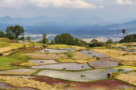 Green rice fields near the village of Limbong in Tana Toraja region of Sulawesi, Indonesia Stock Photo - 25409250