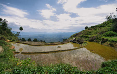 Green rice fields near the village of Limbong in Tana Toraja region of Sulawesi, Indonesia Stock Photo - 25409253