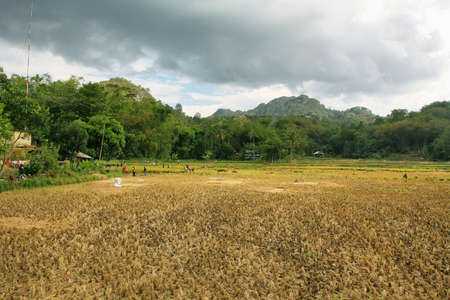 SULAWESI, INDONESIA - SETEMBER 10  Unidentified people working in rice fields on Sep 10, 2009 in Tana Toraja  Tana Toraja is home of Toraja minority ethnic group in South Sulawesi, Indonesia Stock Photo - 25454827