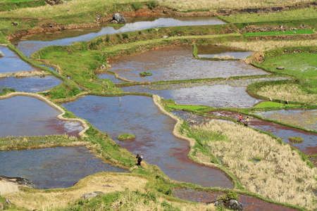 SULAWESI, INDONESIA - SEPTEMBER 11  Unidentified people working in rice fields on Sep 11, 2009 in Tana Toraja  Tana Toraja is home of Toraja minority ethnic group in South Sulawesi, Indonesia  Stock Photo - 25454829