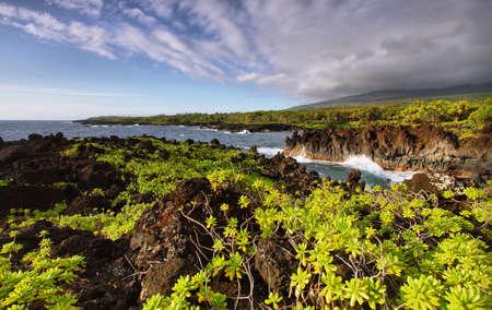 View of the coast and lush vegetation in Waianapanapa State park, Maui island, Hawaii, USA photo