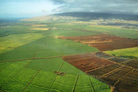 sugar land: Aerial views of sugarcane crops in Maui, Hawaii  Stock Photo