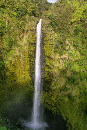 Akaka falls in east of Big Island, Hawaii photo