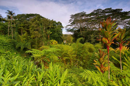 Tropical vegetation with Akaka falls at background, east of Big Island, Hawaii photo