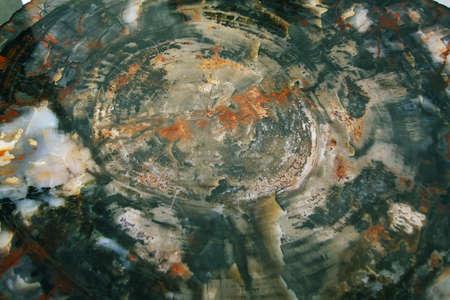 polished wood: Legno lucidato pietrificata di periodo Triassico Parco nazionale della Foresta Pietrificata, Arizona, Stati Uniti d'America Archivio Fotografico