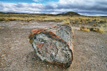 Petrified wood of triassic period in Petrified Forest National Park, Arizona, USA photo
